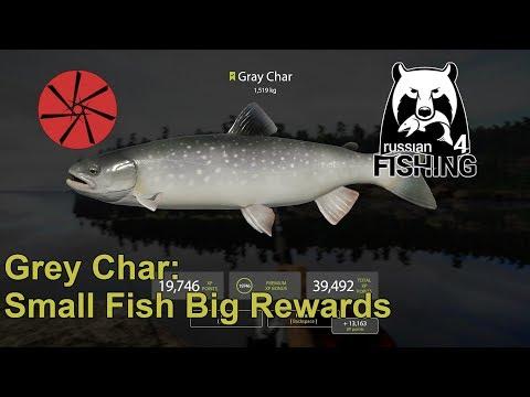 Grey Char - Small Fish, Big Rewards