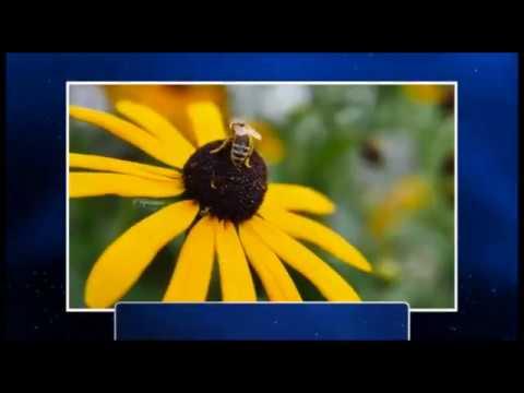Πόσα χιλιόμετρα πρέπει να διανύσει μια μέλισσα για να φτιάξει 1 κιλό μέλι;