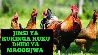 Jinsi Ya Kukinga Kuku Dhidi Ya Magonjwa - Kuku Wa Kienyeji / Chotara