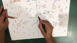 Osmosis | Semi permeable Membrane (Biology)