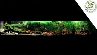 354l - akwarium biotopowe. Zalany obszar pod drzewami w Rio