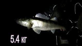 Клев рыбы в ступино астраханской области
