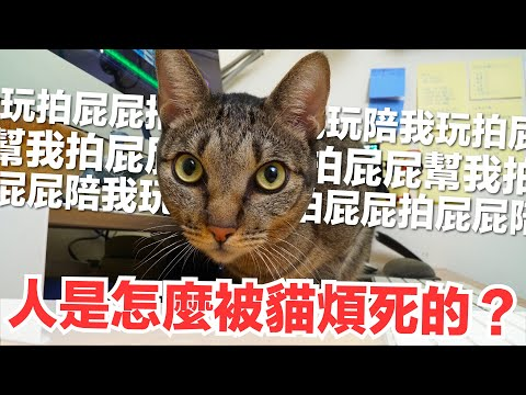 跟貓咪工作!一直撒嬌討摸摸是要怎麼工作啦!