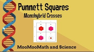 Punnett Square Example Problems-monohybrid Cross