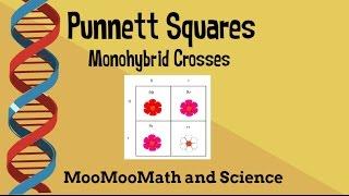 Punnett Square Example Problems-monohybrid Cross