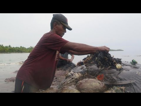 العرب اليوم - شاهد : حوت نافق يبتلع ستة كيلوغرامات من مخلفات البلاستيك في أندونيسيا