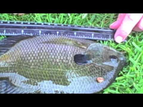 Mid-Fall Pond Fishing