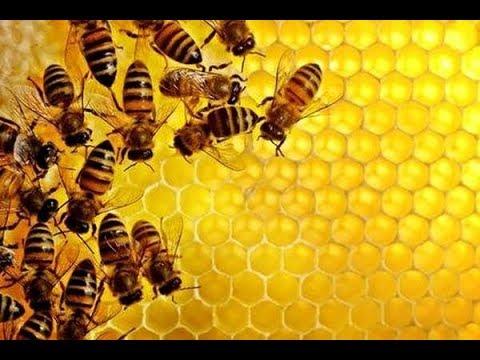 Свойства и польза мёда, виды мёда, медовый сидр для здоровья.