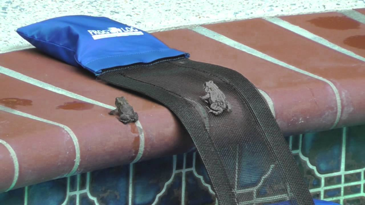 FrogLog: Animal Escape Ramp for Swimming Pools