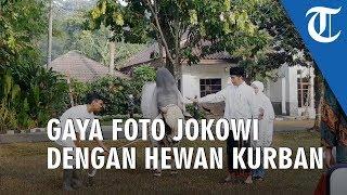 VIDEO: Gaya Jokowi & Iriana Berfoto dengan Sapi Kurban saat Serahkan ke Panitia di Kebun Raya Bogor