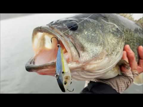 Search Baits for Clear Water Bass Fishing – How to Catch Bass – Spring Largemouth Fishing Tips