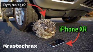 НАЕЗЖАЕМ АВТОМОБИЛЕМ НА ГИГАНТСКУЮ РЫБУ ФУГУ и iPhone XR - КТО ИЗ НИХ ВЫЖИВЕТ?