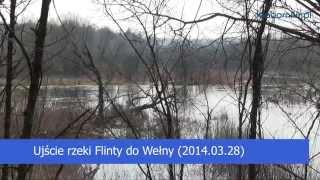 preview picture of video 'Ujście rzeki Flinty do Wełny (2014.03.28)'