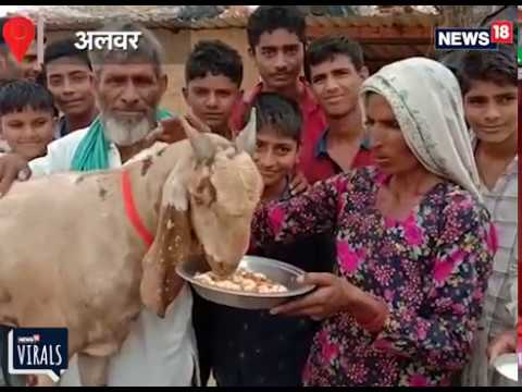 VIRAL VIDEO: Goat worth of 90 Lakh Rupees