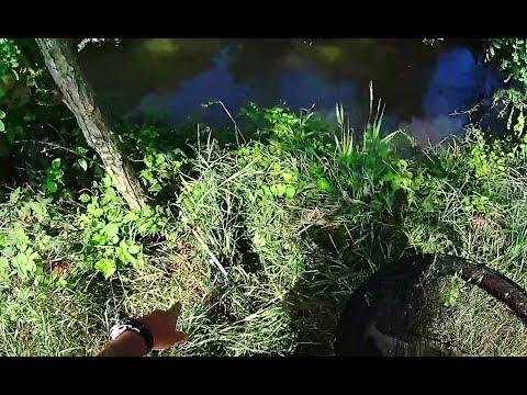 Guardare la pesca su video di Hunter