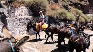Santorini (Greece) - donkeys torture HD