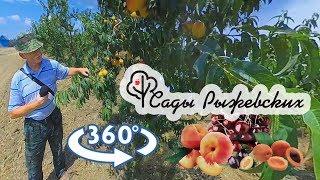 Фермерское хозяйство «Сады Рыжевских» - Видео 360° — Агротуризм в Краснодарском крае