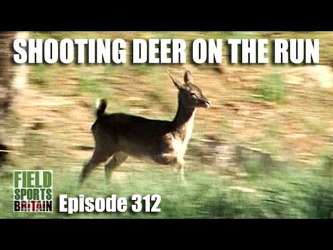 Fieldsports Britain – Shooting Deer on the Run