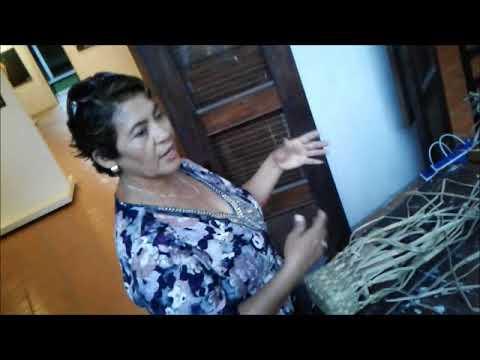Bolsas de lirio acuático en La Antigua, Veracruz