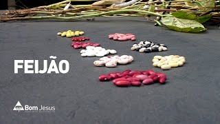 Alternativa de plantio, Carlos Klenki apresenta diversas características do feijão