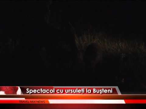 Spectacol cu ursuleţi la Buşteni – VIDEO