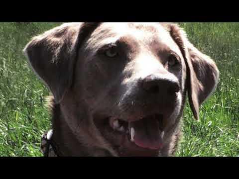 Wie funktioniert der Safety Click beim Hundehalsband English Style