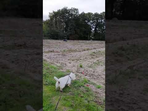 MERLIN fait du QUAD dans le champ avec moi