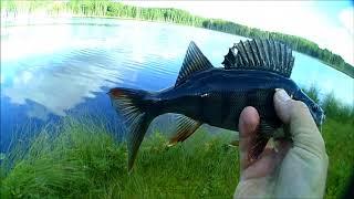 Как поймать щуку на болотном озере