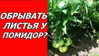 Обрывать ли листья у помидор ?...