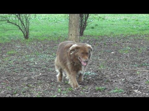Anteprima Video Malattie del cane: la Leishmaniosi canina
