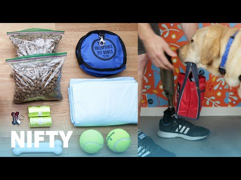 5 Tips To Help Your Dog In A Disaster