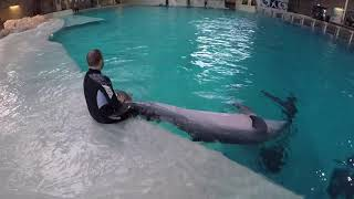 Training A Dolphin Differently