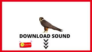 NO COPYRIGHT EURASIAN HOBBY (Falco Subbuteo) FREE SOUND DOWNLOAD 🔻