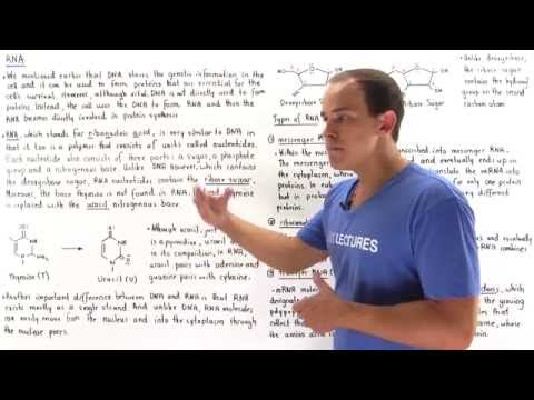 RAPID BIOCHEMISTRY REVIEW GOLJAN
