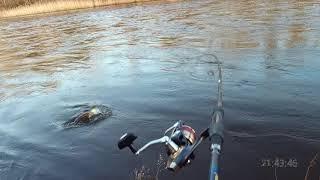 Где и когда ловить лосося в киеве 2020
