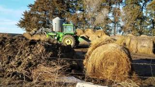 Young farms feeding some cattle Albion Nebraska