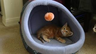 5 week old KITTENS!