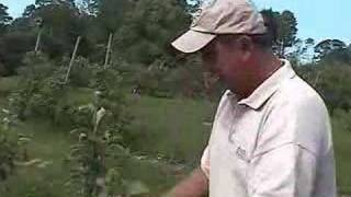 UMass Fruit Advisor: Apple Training Techniques