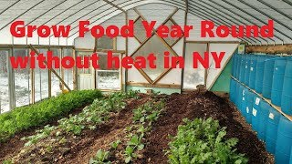 DIY unheated greenhouse grows food year-round in Upstate NY