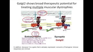 Understanding Gene Therapy, Part 3 – Galgt2 and Dup2 (December 2017)