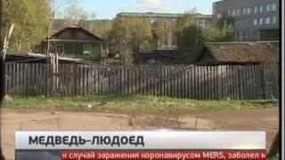 Медведя-людоеда ловят в Хабаровском крае. Новости. Gubernia TV