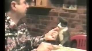 Ужин с котом