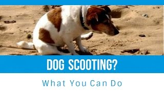 Why Your Dog Scoots and What You Can Do About It