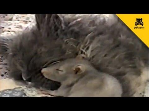 רגע של נחת - חתול ועכבר מתכרבלים ביחד