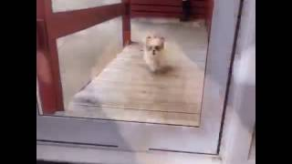 animale accident comic caine