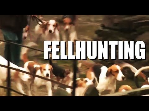 Fellhunting with the Coniston Foxhounds