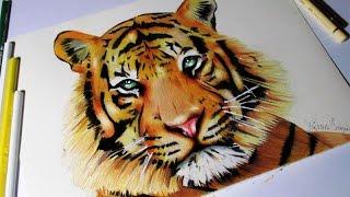 Drawing-Tiger(desenhando: Tigre)/Matheus Frazão