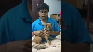 kombai dog breeders in tamilnadu - मुफ्त ऑनलाइन