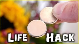 Magnetic Life Hack for Flowers! - Video Youtube