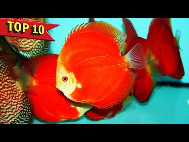 Top 10 Expensive Discus Fish Varieties